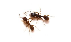 Ant Treatment - Jim's Pest Control